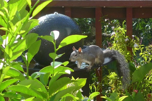 Birds_and_squirrels_003