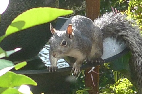 Birds_and_squirrels_005